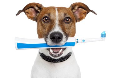 Dog Toothpaste and Breath Deodorizer
