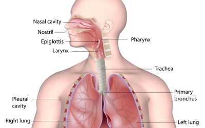 Respiratory Infection and Prevention